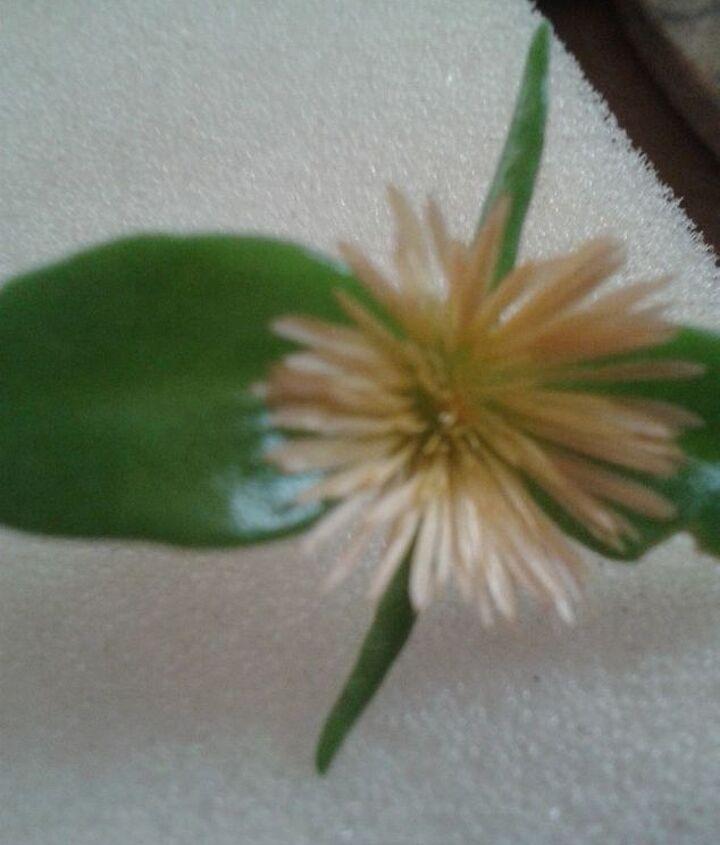 help, flowers, gardening