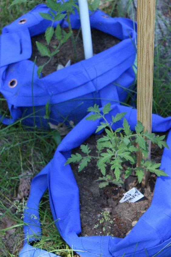the great tomato experiment 2014, flowers, gardening, raised garden beds