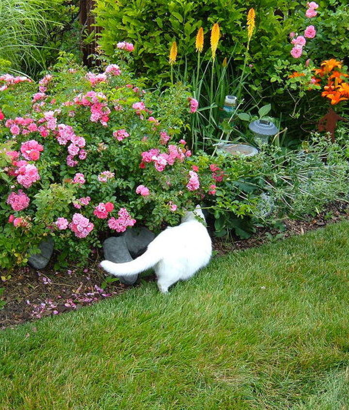 Smudge inspecting the edging