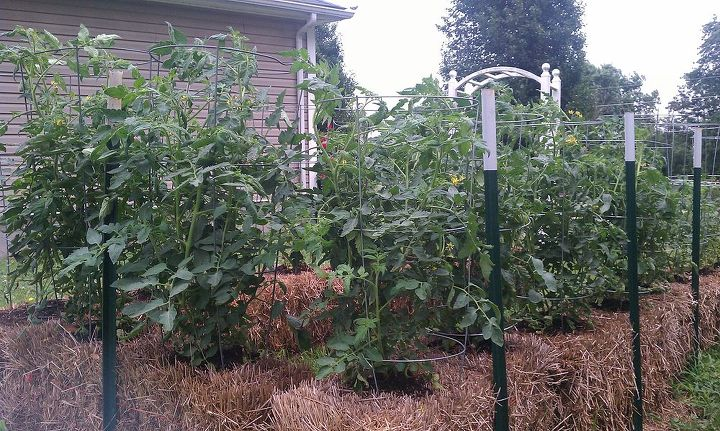 Straw Bale Gardening Great In All Climates From The Arctic To The Caribbean Islands Hometalk