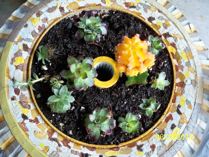 the leopart tire planter, gardening, repurposing upcycling, Add soil plants Hen chicks plus the cutest lil cactus cute but it bites