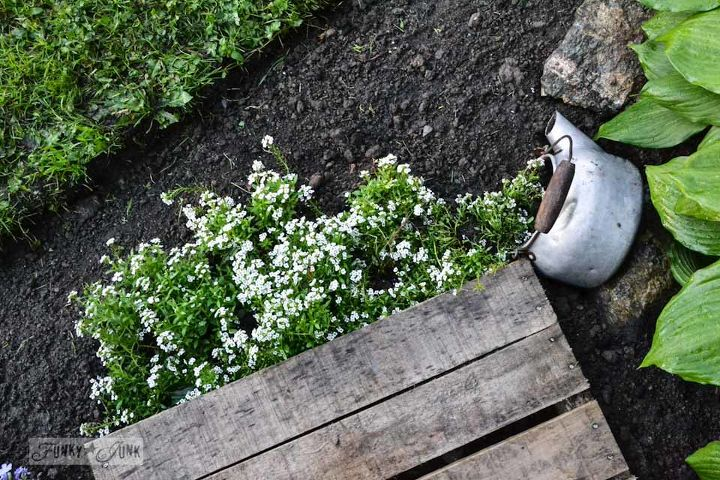 Rather than bring the edge of the pallet to the lawn, I planted some alyssum pouring out of an old kettle instead. It's very cute and rather unexpected.