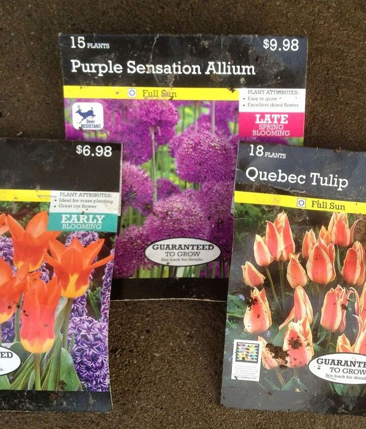 Tulips and Allium bulbs that hopefully come up in the spring.