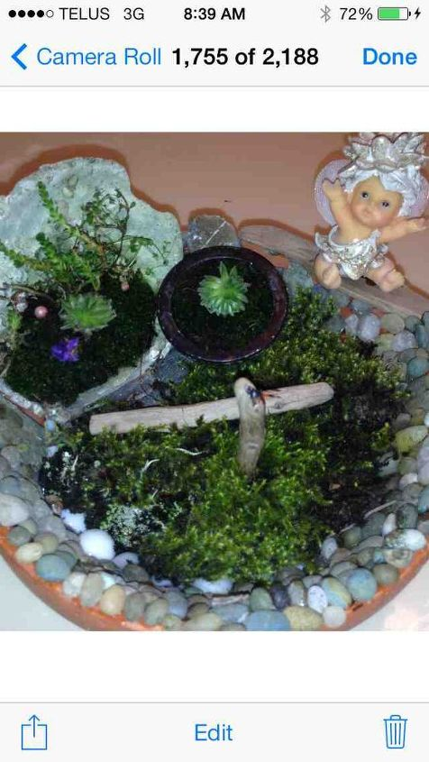 one of my many mini s, gardening, I like the balance of mixing all elements