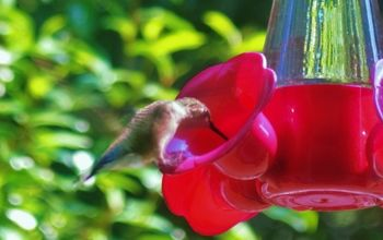 caring for hummingbirds through the winter, outdoor living, pets animals, Our state s DNR is asking bird lovers to keep their feeders filled throughout the winter months to help them in their journey