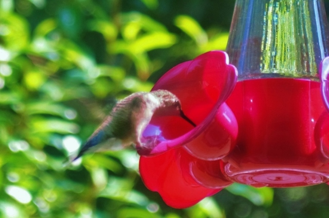 Our state's DNR is asking bird lovers to keep their feeders filled throughout the winter months to help them in their journey.