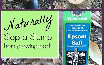 How to Stop Stumps From Growing Back, Naturally