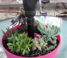 umbrella planter on the cheap side, gardening