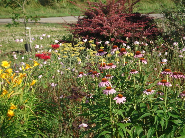 do you share views of your garden to encourage others to try it, flowers, gardening, perennials