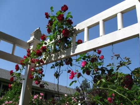 recycled brick, diy, gardening