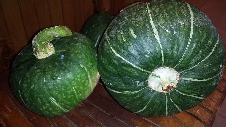 When To Pick Buttercup Squash Not To Be Confused With Butternut Hometalk
