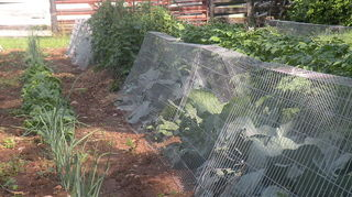 how to keep the critters out of the garden, gardening, pest control, raised garden beds, Garden Commanders at work in our garden