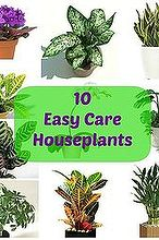 10 easy care houseplants, gardening