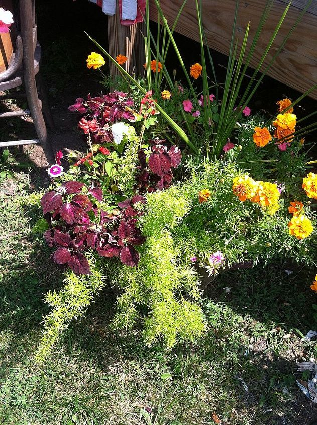 A mixture of annuals.