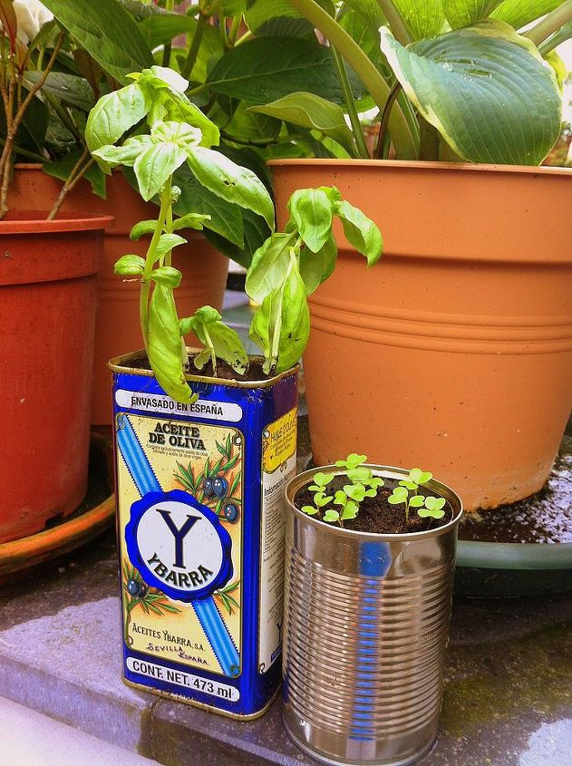 Basil and salad greens sprout from cans that escaped the dump!