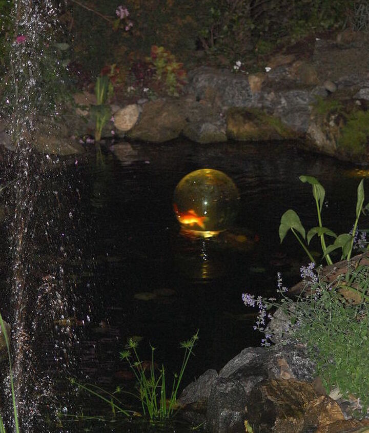 bring your fish above the water enjoy, ponds water features
