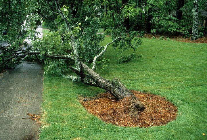 help a tree remove grass, gardening