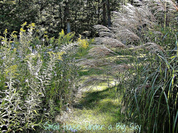 Ornamental grasses form part of the boarder.