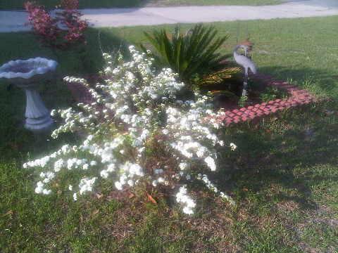 my garden, gardening