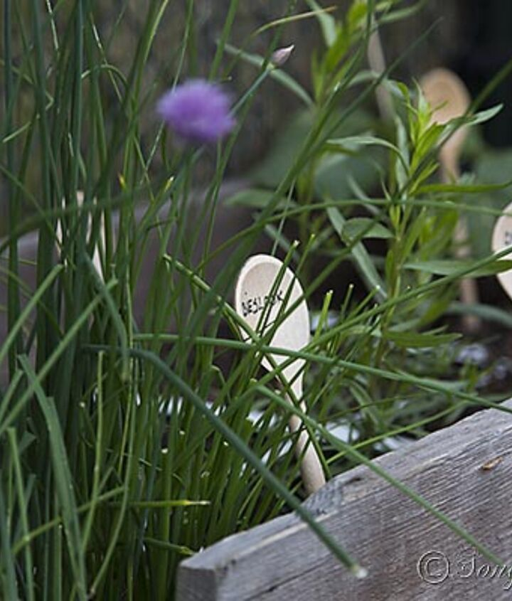 Herbs are perfect plants for a square foot garden, they thrive there.