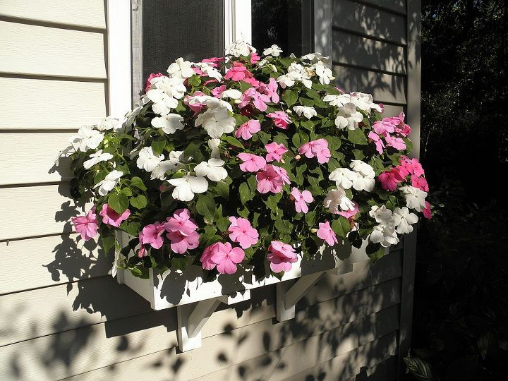 Impatiens in window boxes are healthy.