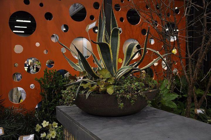 cultivators southeastern flower show display garden, flowers, gardening, Agave dish garden