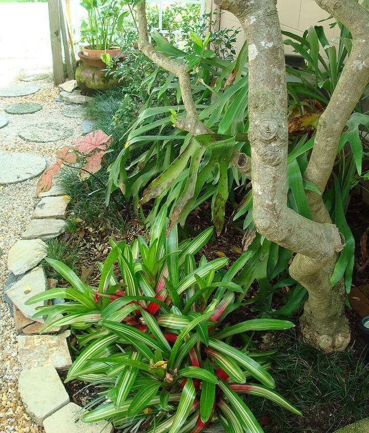 Tri color bromeliads; base of gardenia tree; elk horn fern and mondo grasses.