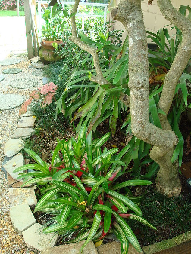 Tri color bromeliads; base of gardenia tree; elk horn fern and mondo grasses.