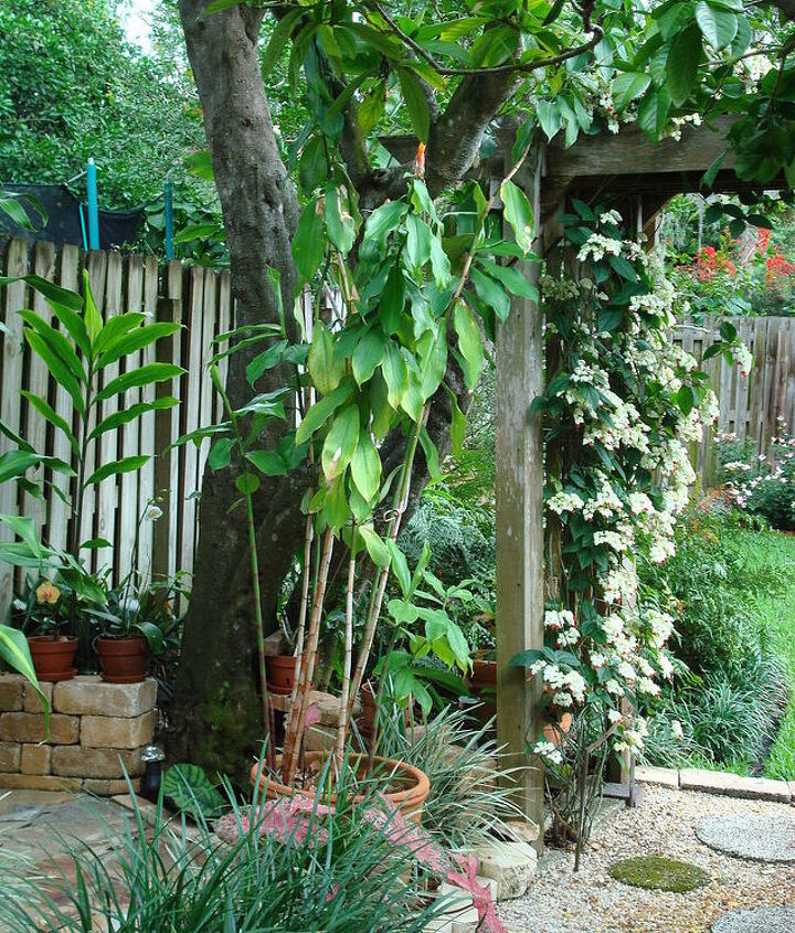 Stone half wall for orchids; gingers and bleeding heart vine on the arbor.