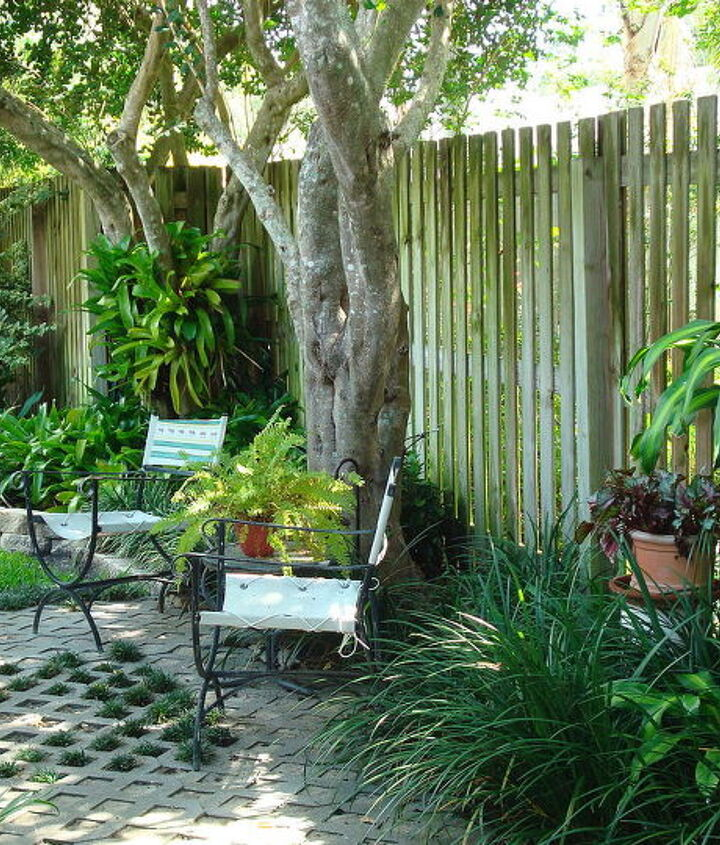 A little sitting area among grasses, begonias and dracena, under the wax leafed ligustrum tree.