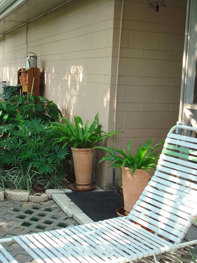 Bird's Nest fern flank entry; living door matt to wipe feet before walking onto the boardwalk.