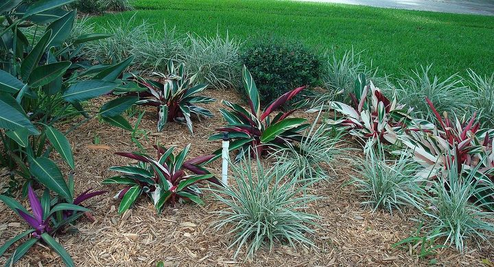 A better look at the ginger and aztec grass.
