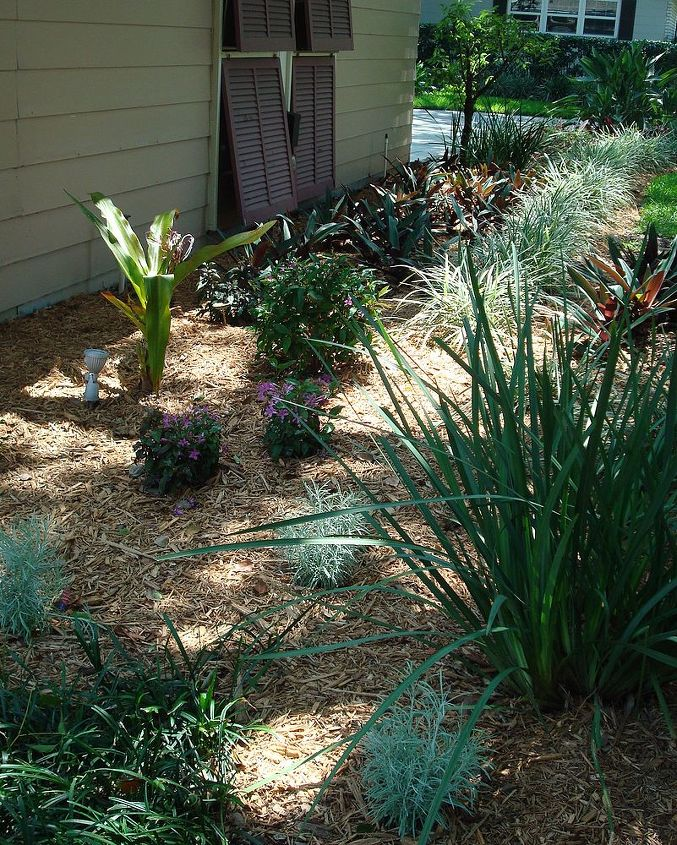 The now modest lily will mature to 6' ht. with the baby shrubs maturing to 4'; the icicles (white mossy looking plants) will expand, but remain mounded.  I prefer to buy my plants small and let the grow into the bed.