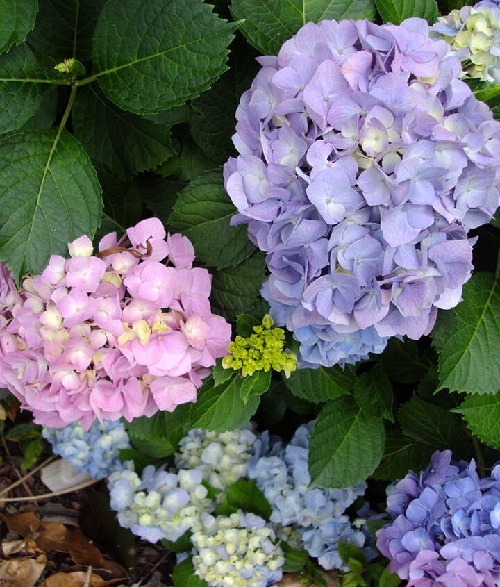 Pink, Blue, Lavender and white