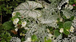 white flowers in october, flowers, gardening