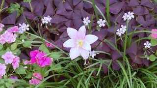 q plants, gardening, WOW
