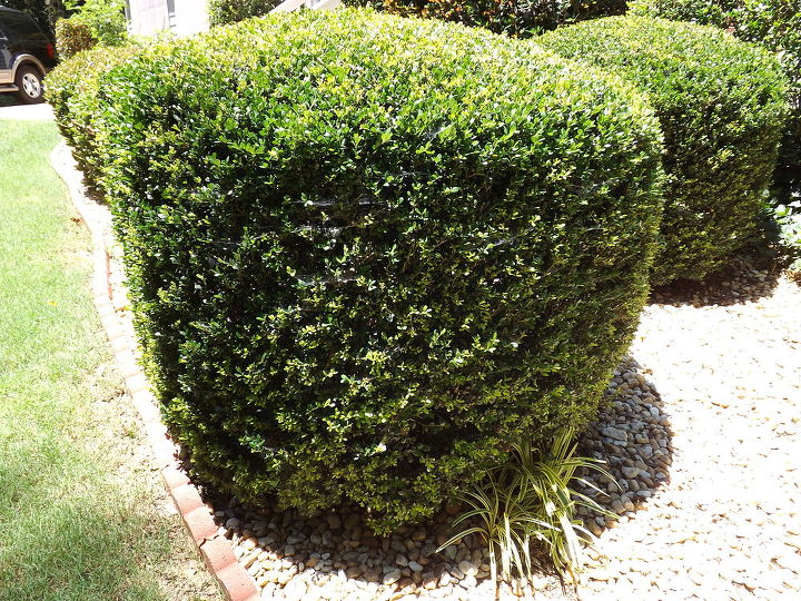 bush should look like this