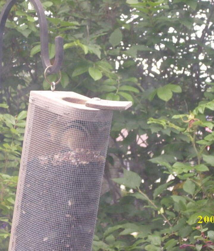 happy chippie inside the homemade bird feeder !