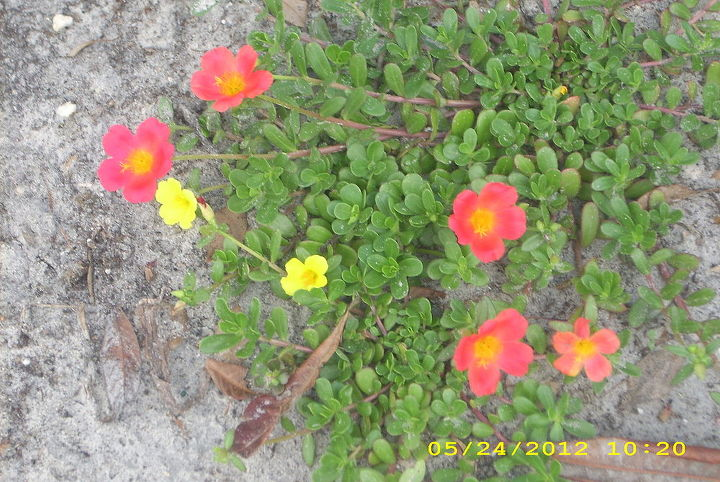 just a few of my plants around my yard they make me smile evertime i look at them, gardening