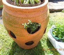 strawberry container ideas to plant, container gardening, flowers, gardening, first hole is thyme