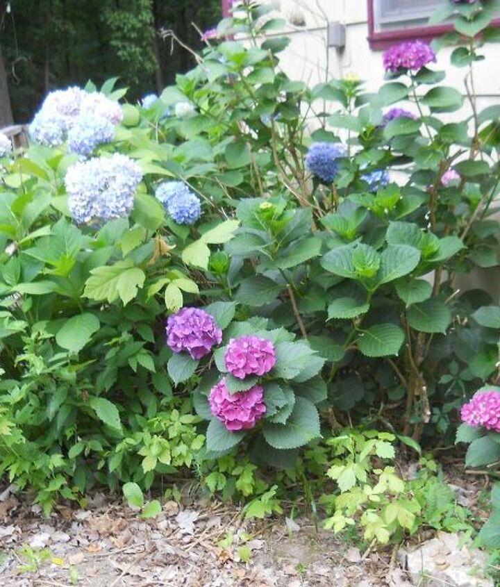 a neighbors bush