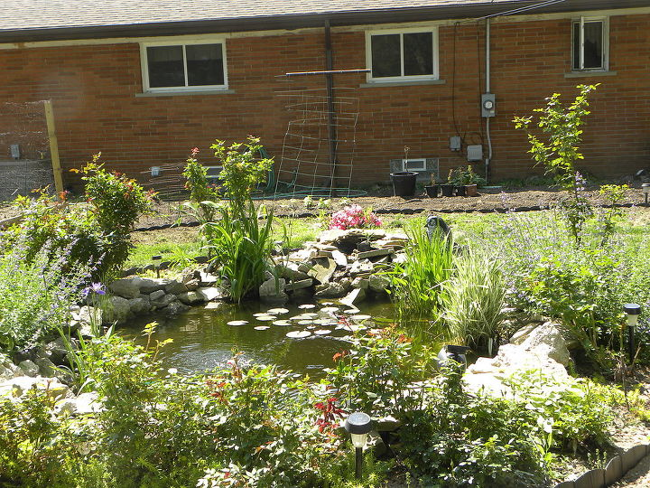 our recycled pond, gardening, outdoor living, ponds water features, Our backyard pond