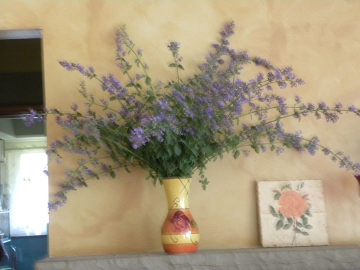 some russain sage i harvested today they are huge this year, home decor