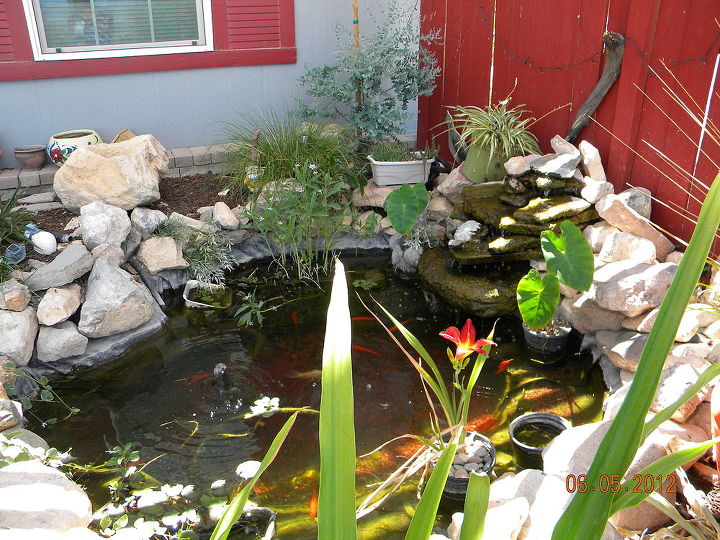 my court yard lovin it, curb appeal, outdoor living, ponds water features, porches