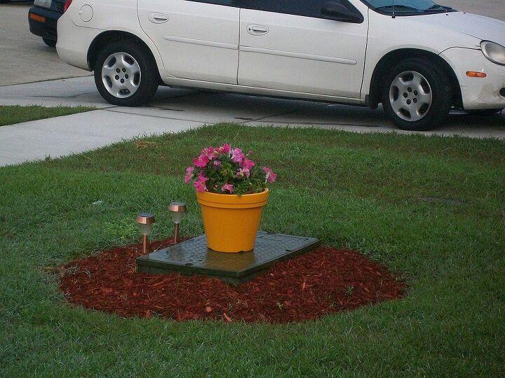 plant, gardening