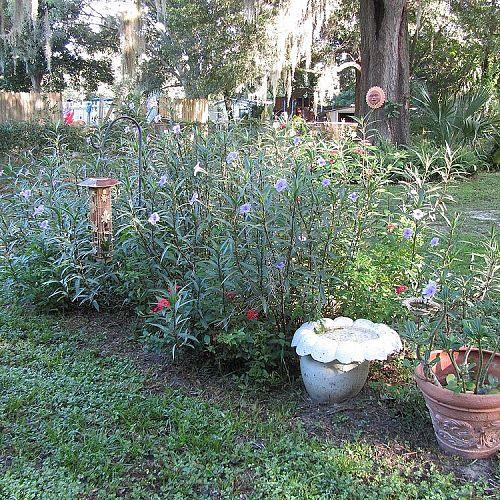 my back yard and front yard gardening my flower and plants, flowers, gardening, outdoor living