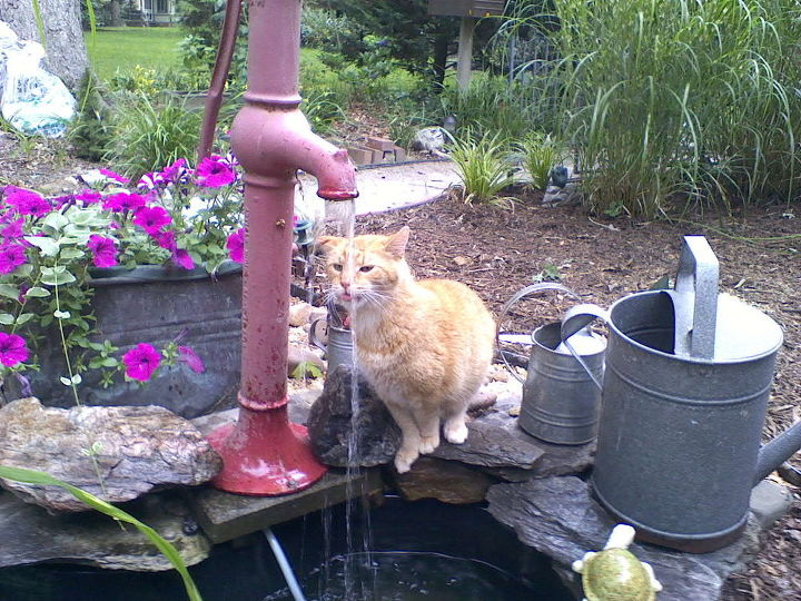The hand pump fountain was a favorite of Thomas the cat.