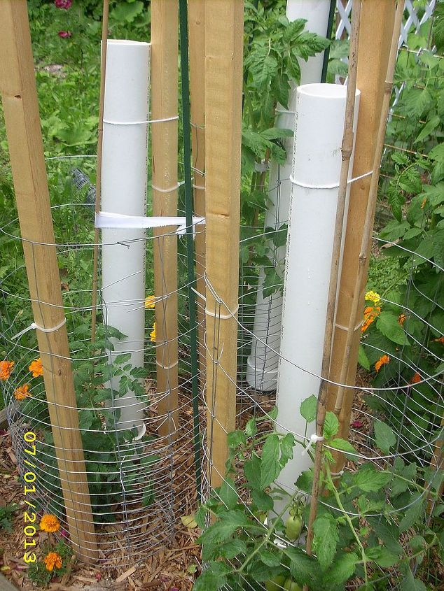 tomato cages vs tomato ladders and conserving rain water, diy, gardening, how to, painting, repurposing upcycling, Tubes in the tomato cages
