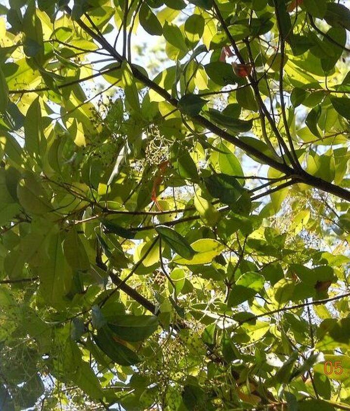 q type of tree, gardening