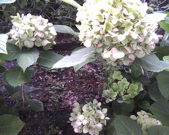 first blooms, gardening